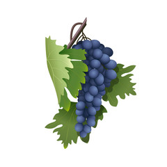 bunch of grapes on a branch with leaves