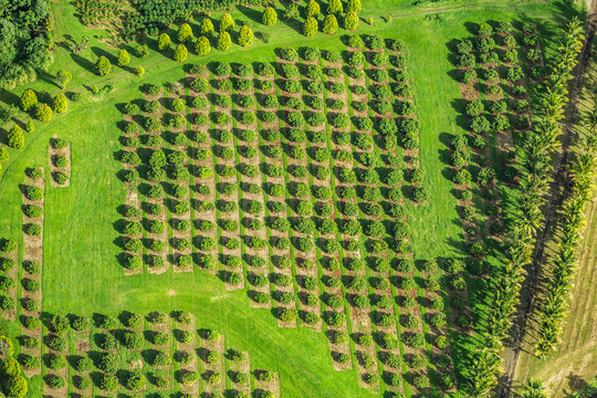 Macadamia nut farm aerial drone top view shot of farming land in Hawaii, USA.