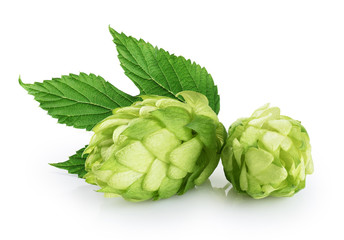 Hops and hop leaf isolated on white background.