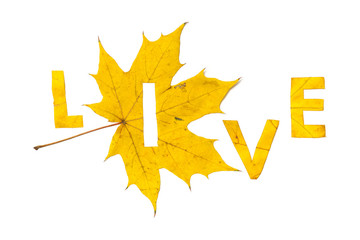 Live. Letters carved from wedge leaves