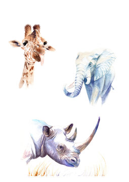 poster with watercolor drawings. Wild animals: elephant, giraffe, rhino