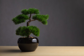Foto op Plexiglas Bonsai Bonsai on the desk. The backdrop is a dark gray background. The bonsai concept adorned the desk to reinforce the aura, japanese whitepine bonsai.