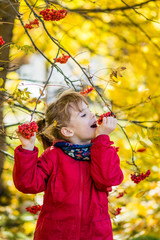 Young girl hold in hands Rowan berries and try to eat it. Autumn park.