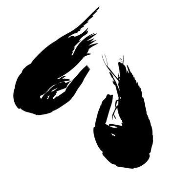 on white background icon, silhouette of shrimp