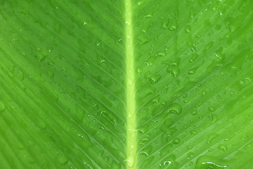 Tropical leaves green on white background.