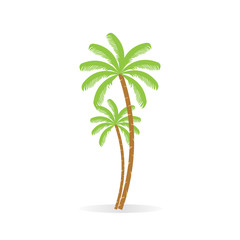 Coconut tree. Palm with bunch of coconut fruit. Isolated. White background.