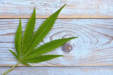Medical Cannabis hemp plant leaf on a empty copy space wooden background