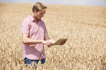 Farmer With Digital Tablet Examining Wheat Crop In Field