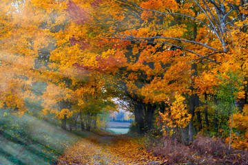 Beautiful Lithuanian autumn landscape, beautifully painted tree leaves.