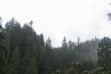 Fototapeten Wald Pine forest landscape