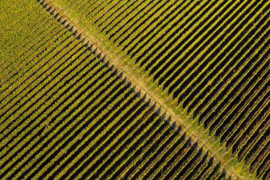 Aerial top view of vineyard