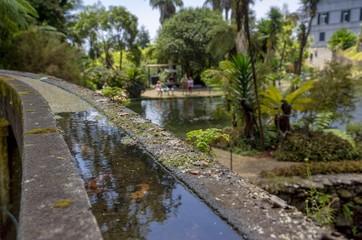 Tropical Park - pond