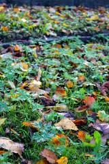 Herbstlicher Parkboden