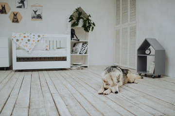 Dog lying on the floor in children's room