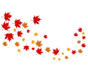 Maple leaves logo and symbol vector