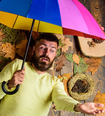 Fall atmosphere attributes. Man bearded lay on wooden background with orange leaves top view. Hipster with beard mustache expect rainy weather hold colorful umbrella. Rainy weather forecast concept