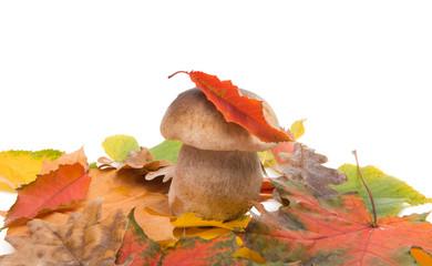 white mushroom with autumn leaves