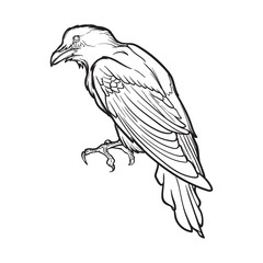 Black Raven sitting. Accurate line drawing . isolated on white background. Halloween design element. EPS10 vector illustration
