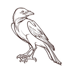Black Raven sitting. Accurate line drawing. isolated on white background. Halloween design element. EPS10 vector illustration
