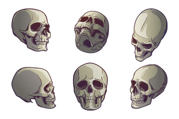 Set of 5 Human Skulls in various view angles. Linear drawing painted in 3 shades, isolated on white background. EPS10 vector illustration