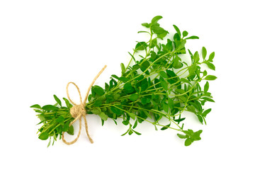 Isolated Bundle of Thyme (Thymus).