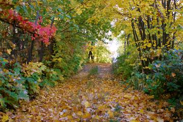 Autumn in the Volga region