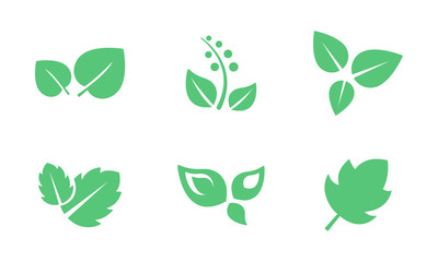 Green leaves set, leaf of trees and plants vector Illustration on a white background