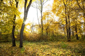 Autumn landscape. Yellow leaves