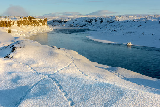 Ptarmigan tracks in the snow by Jokulsa a Fjollum river, near Selfoss waterfall, Iceland in early morning light