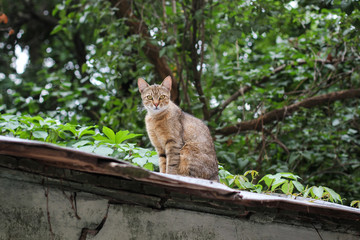 Curious cat sitting on the roof. A proud cat on the roof.street vagrant cat
