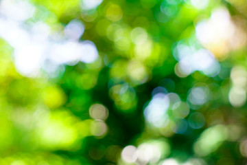 fresh nature green blurry and bokeh background.