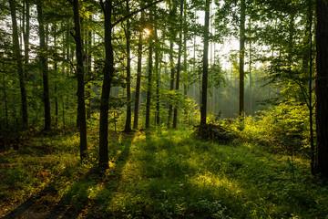 Sonnenaufgang,Wald,Bäume,