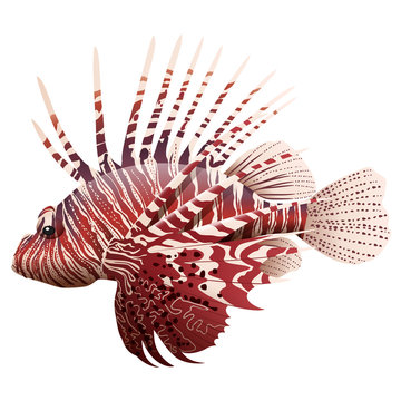 Cartoon lionfish isolated on white background. Vector illustration