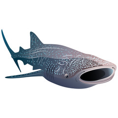 Cartoon whale shark isolated on white background. Vector illustration