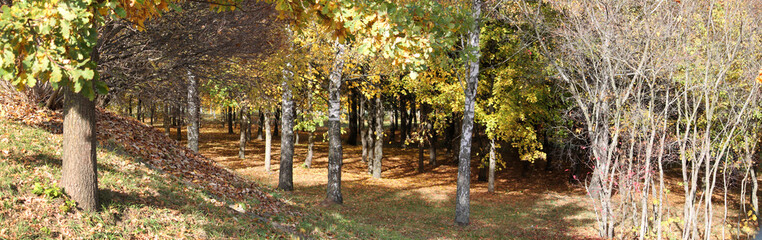 Early autumn landscape. Panoramic view of park with deciduous trees that began to turn yellow