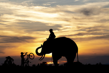 Silhouette of happiness feeling between poeple and elephant in Surin, Thailand.