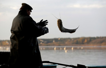 A fisherman throws a fish during the traditional carp haul near the town of Trebon