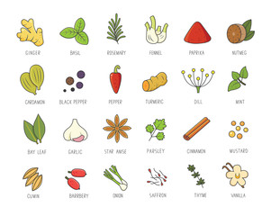 Vector set of culinary spices and herb for your menu or kitchen design. Condiments collection, ginger, basil, paprika, chili pepper, garlic in linear style.