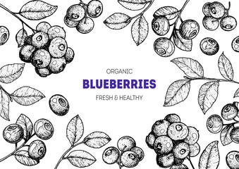 Blueberries frame vector illustration. Hand drawn berries. Vintage style design. Organic food, healthy food.
