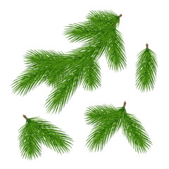 Set of pine branches for christmas design. Pine in a realistic style. Vector .Eps10.