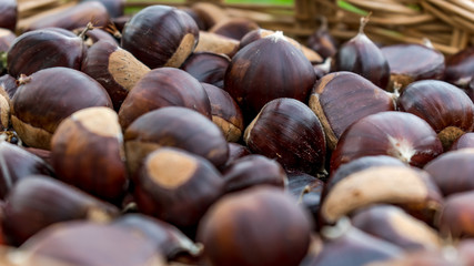 large group of chestnuts
