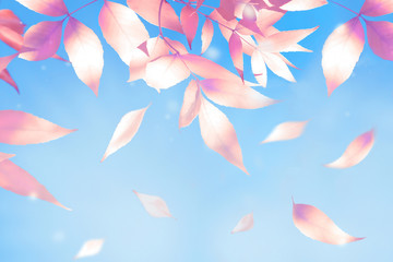 Natural autumn background. Pink and orange autumn leaves against the blue sky. Free space for text.