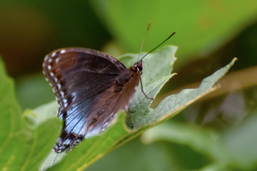 Close-Up of a Butterfly Perched on a Leaf
