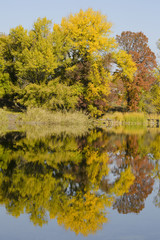 Tuinposter Canada Autumn deciduous forest reflected in the river. Bright blue sky