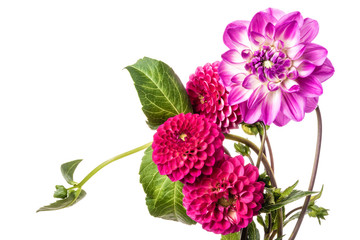 Fotorolgordijn Dahlia Beautiful colorful arrangement dahlia flowers isolated on a white background