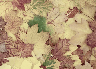 schöner herbstlicher Hintergrund aus Ahornblättern