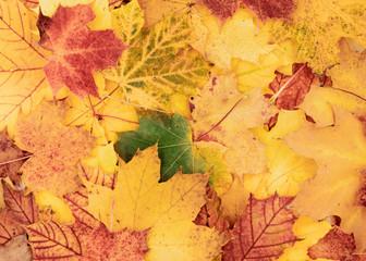 schöner Farbenfroher, herbstlicher Hintergrund aus Blättern