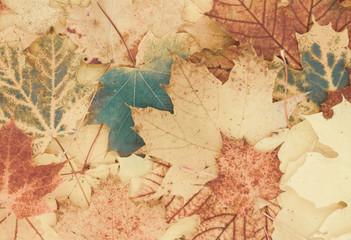 schöner herbstlicher Hintergrund aus Blättern
