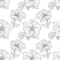 Petunia. Flower, leaf.  Sketch. Sketch. Monochrome. Background, wallpaper, texture, seamless.