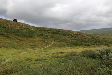 A trail along green grassy hills
